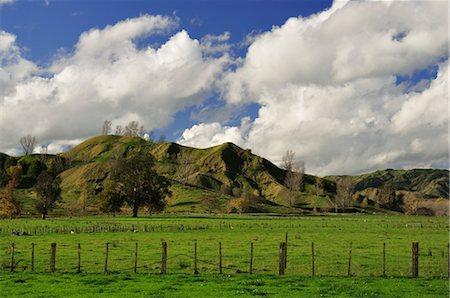 Farmland near Frasertown, Hawke's Bay, North Island, New Zealand Stock Photo - Rights-Managed, Code: 700-03508402