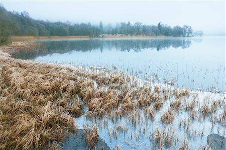 Reeds, Loch Achray, Trossachs, Stirling, Scotland, United Kingdom Stock Photo - Rights-Managed, Code: 700-03508674
