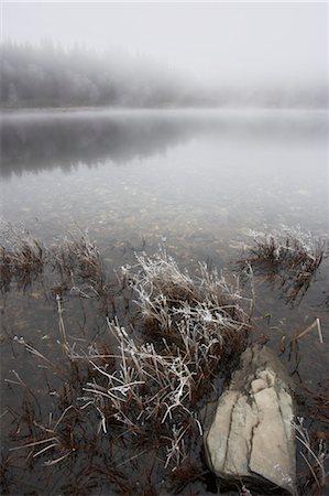 Reeds, Loch Achray, Trossachs, Stirling, Scotland, United Kingdom Stock Photo - Rights-Managed, Code: 700-03508670
