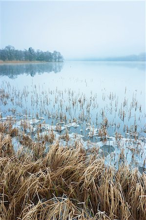 Reeds, Loch Achray, Trossachs, Stirling, Scotland, United Kingdom Stock Photo - Rights-Managed, Code: 700-03508671