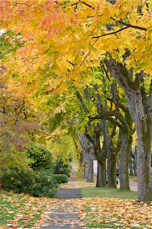 Autumn, 13th Avenue, West Point Grey, Vancouver, British Columbia Stock Photo - Rights-Managed, Code: 700-03615864