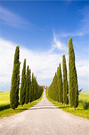 Road Lined with Cypress Trees, Val d'Orcia, Tuscany, Italy Stock Photo - Rights-Managed, Code: 700-03622771