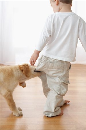 Goldendoodle Puppy Pulling on Boy's Pants Stock Photo - Rights-Managed, Code: 700-03644596