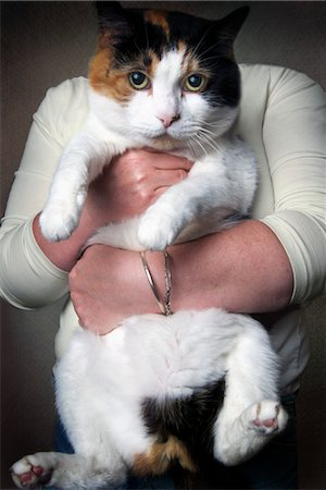 Woman Holding Overweight Cat Stock Photo - Rights-Managed, Code: 700-03644662