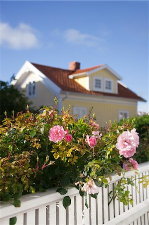 quaint house - Roses and White Fence in front of House Stock Photo - Rights-Managed, Code: 700-03659254