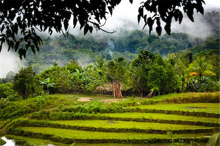 southeast asian - Rice Terraces. Lapale, Sumba, Indonesia Stock Photo - Rights-Managed, Code: 700-03665824