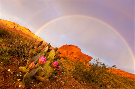 rainbow - Rainbow over Valley of Fire State Park, Nevada, USA Stock Photo - Rights-Managed, Code: 700-03685752