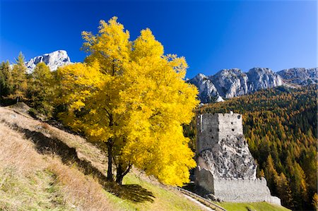 Ash Tree and Castello di Andraz in Autumn, Mount Castello, Dolomites, Italy Stock Photo - Rights-Managed, Code: 700-03685921