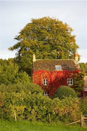 quaint house - Old Farmhouse Covered in Red Boston Ivy in Autumn, Cotswolds, Gloucestershire, England Stock Photo - Rights-Managed, Code: 700-03682430