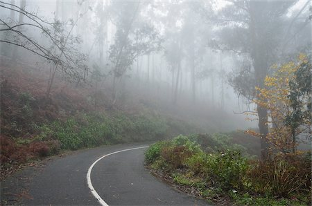 Forest Road in Fog, near Achadas da Cruz, Madeira, Portugal Stock Photo - Rights-Managed, Code: 700-03737955