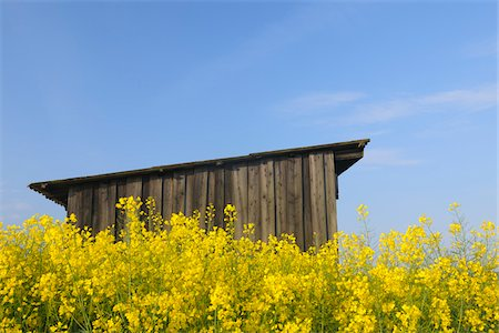 Wooden Hut in Canola Field, Roellbach, Bavaria, Germany Stock Photo - Rights-Managed, Code: 700-03738998