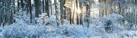 panoramic winter scene - Woodland at Sunrise after Snow Fall, Dorset, England Stock Photo - Rights-Managed, Code: 700-03768721