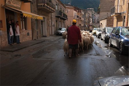 Herding Flock of Sheep Past Butcher Shop, Collesano, Sicily, Italy Stock Photo - Rights-Managed, Code: 700-03777969