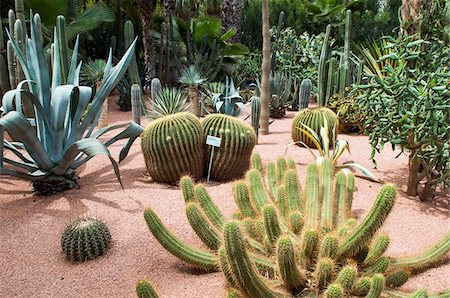 Cacti at Jardin Majorelle, Marrakech, Morocco Stock Photo - Rights-Managed, Code: 700-03778126