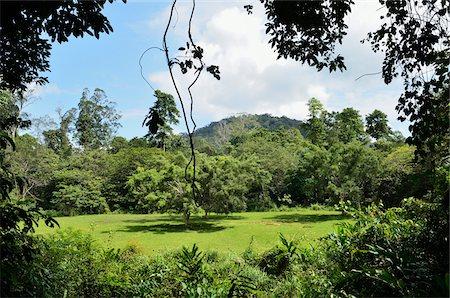 southeast asian - Rainforest, Taman Negara National Park, Pahang, Malaysia Stock Photo - Rights-Managed, Code: 700-03799548