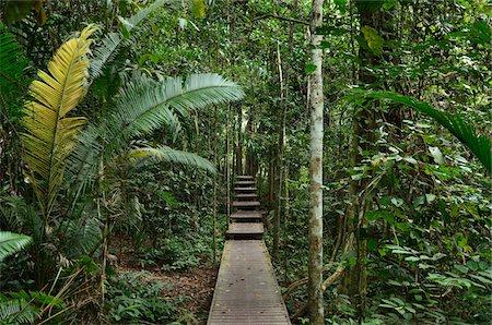 southeast asian - Boardwalk Through Rainforest, Taman Negara National Park, Pahang, Malaysia Stock Photo - Rights-Managed, Code: 700-03799559