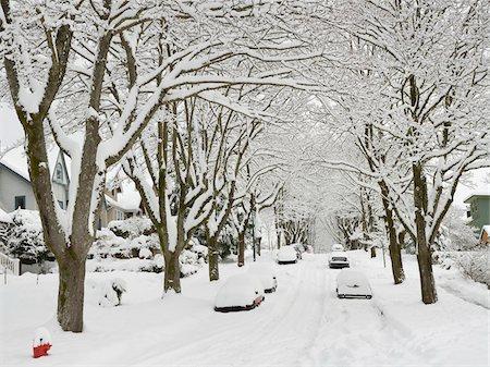 Fresh Snowfall, Dunbar-Southlands Neighbourhood, Vancouver, British Columbia, Canada Stock Photo - Rights-Managed, Code: 700-03805569