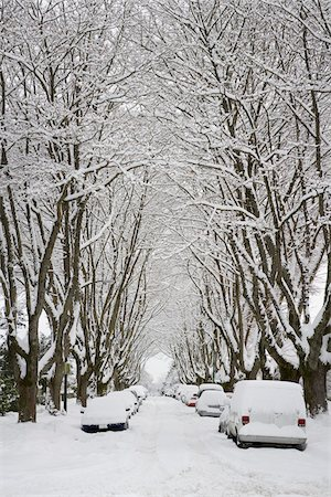 snow covered trees - Fresh Snowfall, Dunbar-Southlands Neighbourhood, Vancouver, British Columbia, Canada Stock Photo - Rights-Managed, Code: 700-03805572