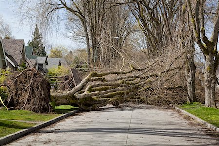 Fallen Tree Blocking Street, Vancouver, British Columbia, Canada Stock Photo - Rights-Managed, Code: 700-03805731