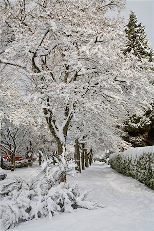 Fresh Winter Snowfall in Dunbar-Southlands Neighbourhood, Vancouver, British Columbia, Canada Stock Photo - Rights-Managed, Code: 700-03848707
