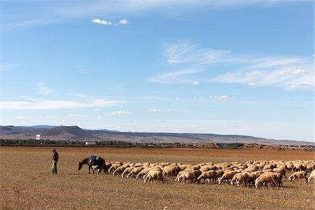 Man Herding Sheep, Teruel Province, Aragon, Spain Stock Photo - Rights-Managed, Code: 700-03848936