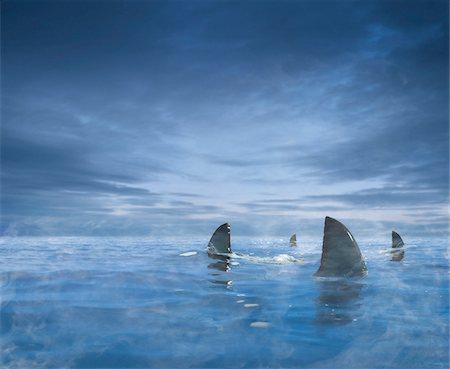 Circling Sharks Stock Photo - Rights-Managed, Code: 700-03849509