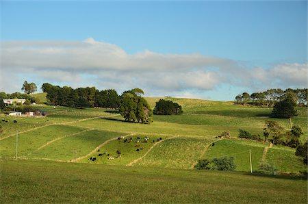 Farmland near Yolla, Tasmania, Australia Stock Photo - Rights-Managed, Code: 700-03907007