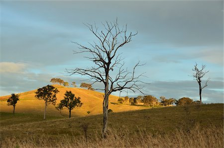 Countryside near Dungog, New South Wales, Australia Stock Photo - Rights-Managed, Code: 700-03907049