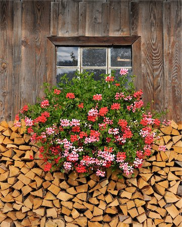 Firewood and Geraniums Beneath Window Stock Photo - Rights-Managed, Code: 700-03979818