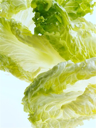 Batavia lettuce leaves on a white background Stock Photo - Rights-Managed, Code: 824-07193371