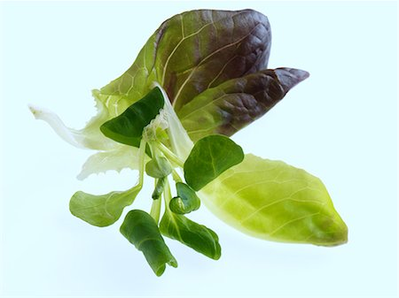 Salad leaves on a white background Stock Photo - Rights-Managed, Code: 824-07193373