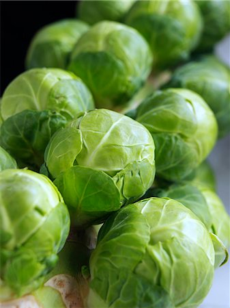 sprout - Brussels sprouts tree Stock Photo - Rights-Managed, Code: 824-07586118
