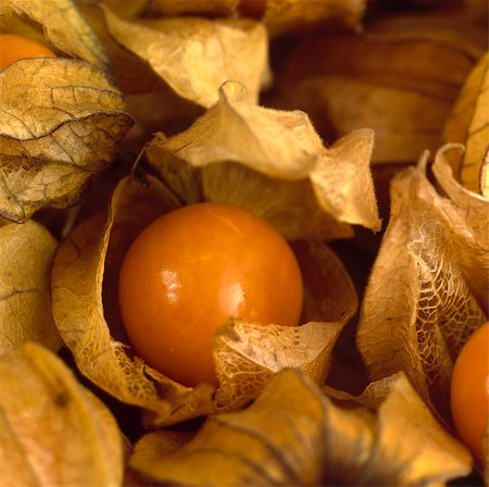 Physalis/ Cape Goseberry Stock Photo - Rights-Managed, Code: 824-03722932