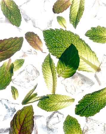 Mint leaves Stock Photo - Rights-Managed, Code: 825-05985297