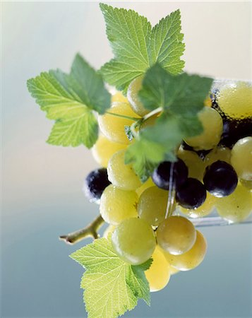 Grapes Stock Photo - Rights-Managed, Code: 825-05986075
