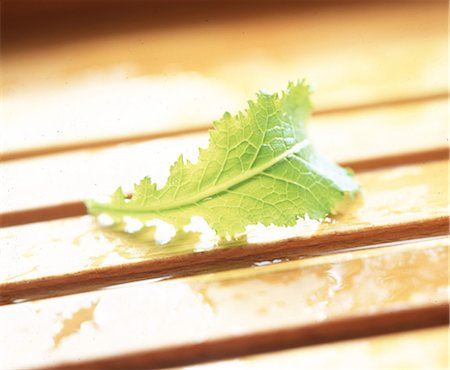 Green leaf on wooden slats Stock Photo - Rights-Managed, Code: 825-05988546