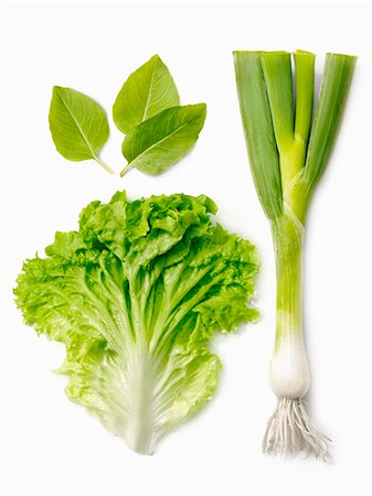 Leek,lettuce leaf and basil Stock Photo - Rights-Managed, Code: 825-07649177