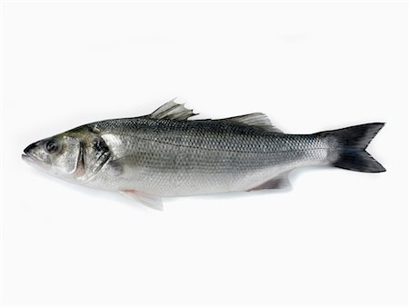 bass Stock Photo - Rights-Managed, Code: 825-02305343