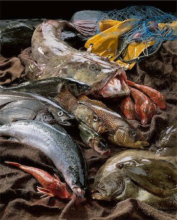 Selection of fish from Brittany Stock Photo - Rights-Managed, Code: 825-03628425
