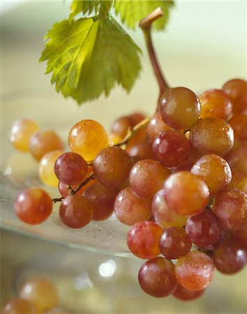 Grapes Stock Photo - Rights-Managed, Code: 825-03629075