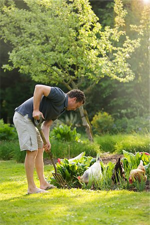 Man Gardening Stock Photo - Rights-Managed, Code: 822-05948636
