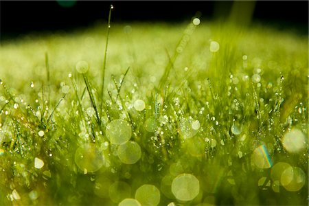Grass Blades and Dew Drops, Close up view Stock Photo - Rights-Managed, Code: 822-05948720