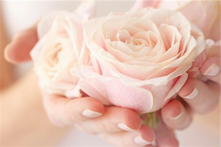 femininity - Woman's Hands Holding Pink Rose Stock Photo - Rights-Managed, Code: 822-05948844