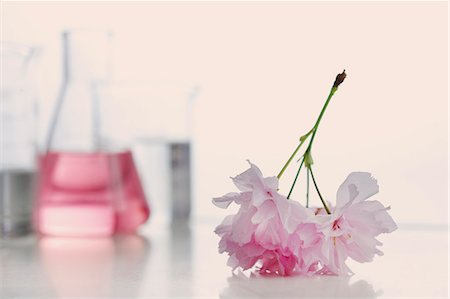 Close up of Pink Cut Flower with Laboratory Glassware Stock Photo - Rights-Managed, Code: 822-07117517