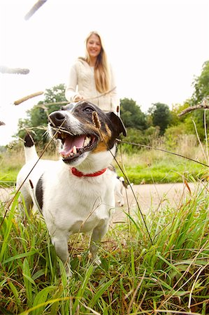 Jack Russell Dog with Young Woman in Background Stock Photo - Rights-Managed, Code: 822-07355446