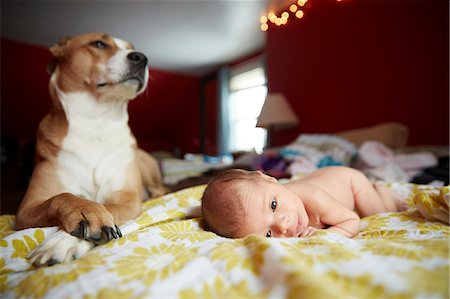 Dog Guarding Newborn Baby Girl Stock Photo - Rights-Managed, Code: 822-08026273