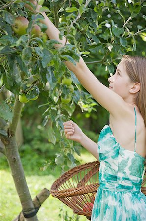 single fruits tree - Teenaged girl standing in an apple orchard picking apples Stock Photo - Rights-Managed, Code: 822-02620752