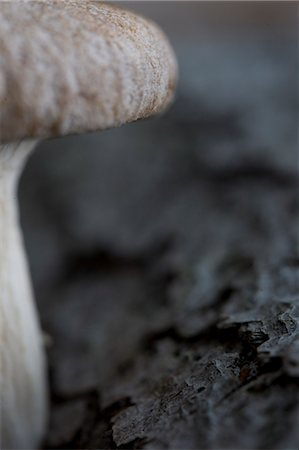 fungus - Extreme close up of an eryngi mushroom Stock Photo - Rights-Managed, Code: 822-03407112