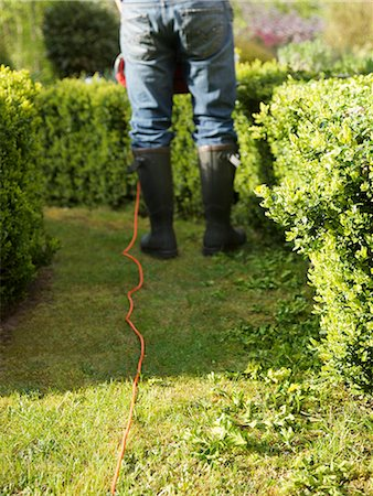 Back view of a gardener pruning a hedge with electrical trimmer, headless Stock Photo - Rights-Managed, Code: 822-03485402