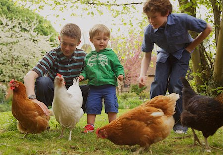 preteen touch - Children and Chickens in Garden Stock Photo - Rights-Managed, Code: 822-03601770